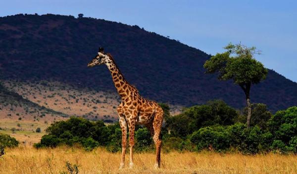 Wildlife in Tansania.