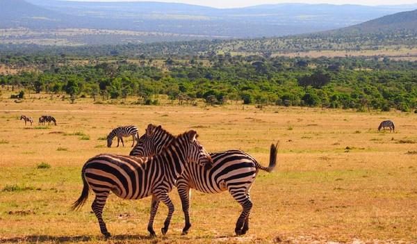 Artenvielfalt Kenias