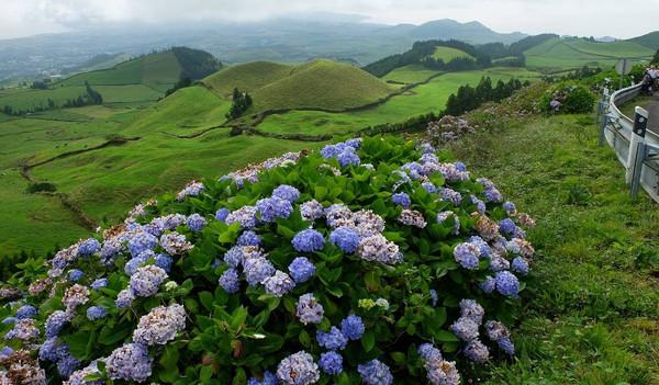 Blumenpracht auf den Azoren