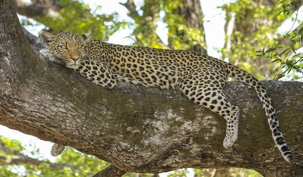 Suedafrika ist genau richtig für Tierbegeisterte.