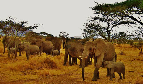 Kenia & Tansania: Die besondere Fly-In-Safari
