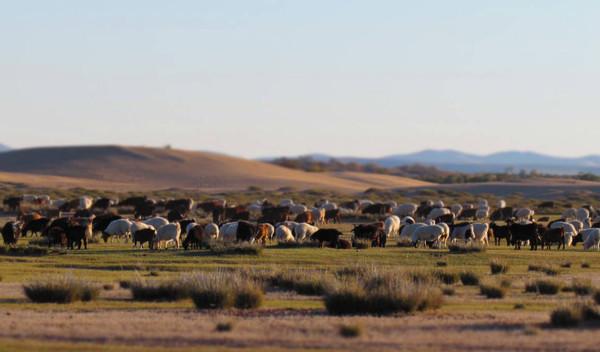 Höhepunkte der Mongolei